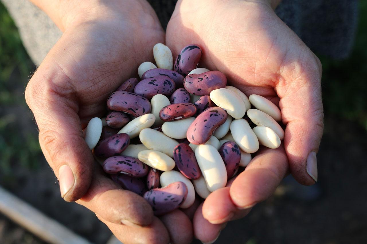 Proteinreiche Bohnen getrocknet