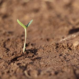 Erdetypen brauchen beim Sport Genuss und Gruppenzugehörigkeit